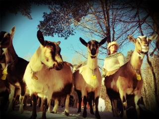 katie & goats
