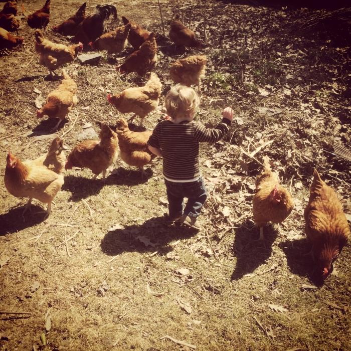 Chicken hugging