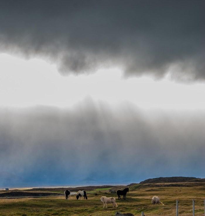 Icelandfarms-10