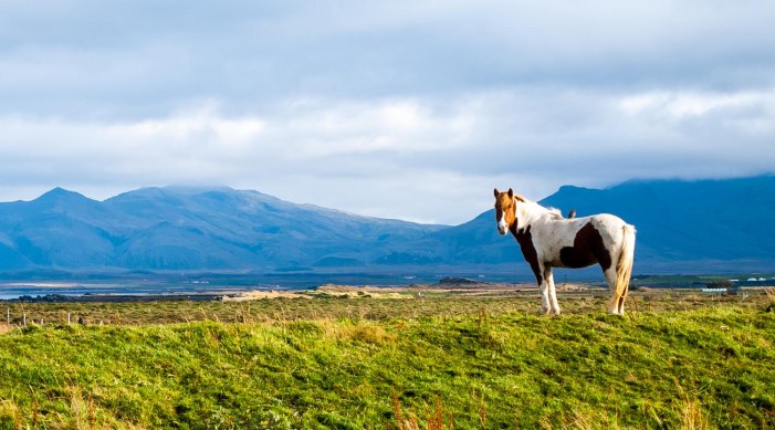 Icelandfarms